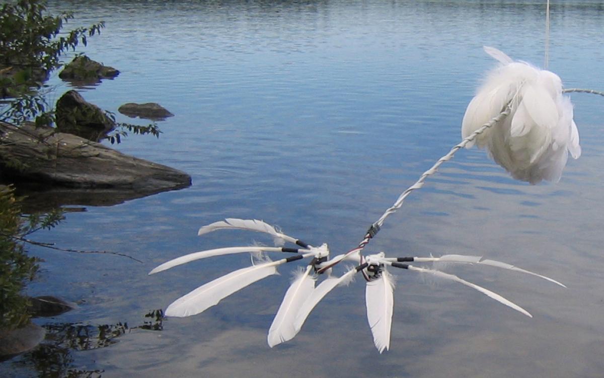 Duck, Duck, Goose, 2007