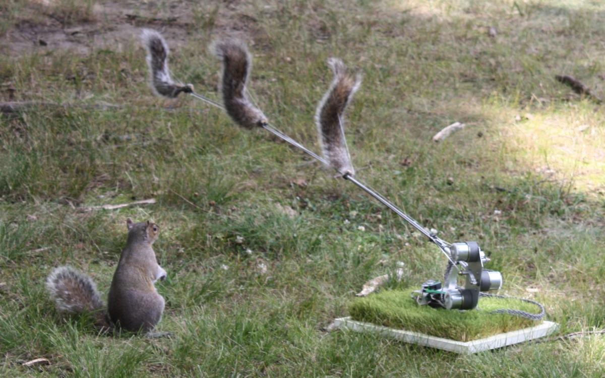 Danger, Squirrel Nutkin!, 2009