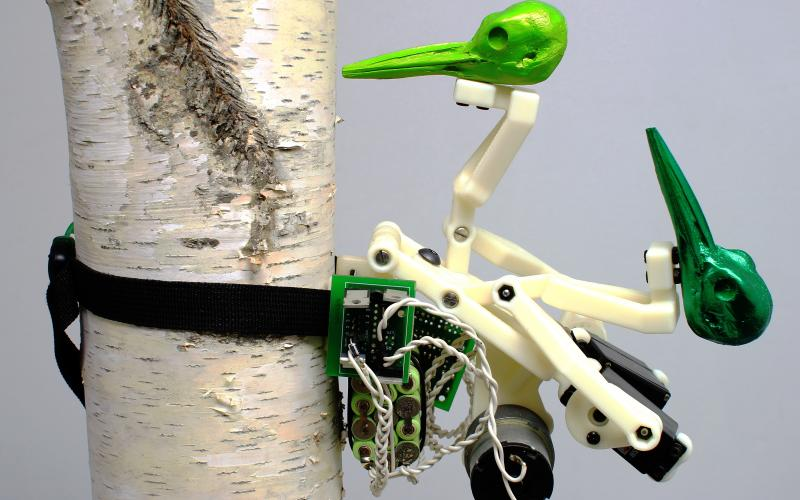 Ian Ingram / The Woodiest (2010) / birch pole, monitor, robotic bird consisting of electronics, motors, and plastic / dimensions variable