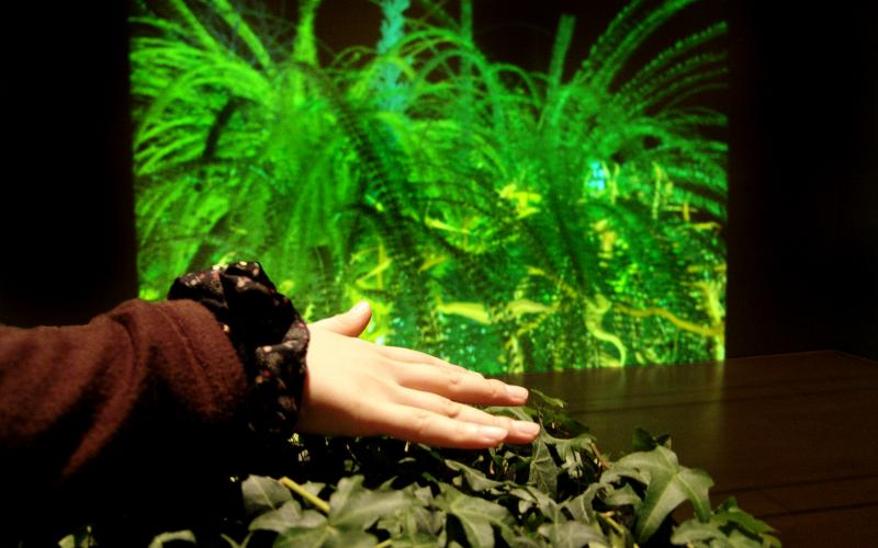 Interactive Plant Growing, 1992 / Installation View